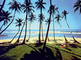 Sri Lankan beach, Time for Travel