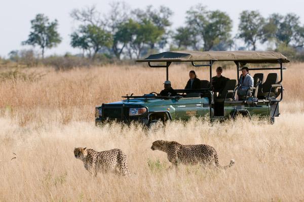 Bespoke Africa Vacations-africa-vacation-fugitives-drift-wildlife-honeymoon-safari-luxury-tours-tailor-made-big-5-safari-south-africa-& Beyond Africa safaris -African safaris specialists
